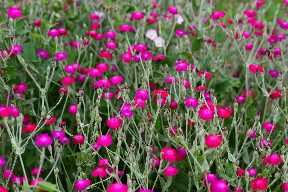 Verrassend 10 x planten die bestand zijn tegen een droge zomer - Tuinen.nl AV-88