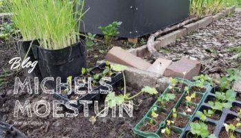 Michels moestuin, moestuin, blog, tuinen.nl