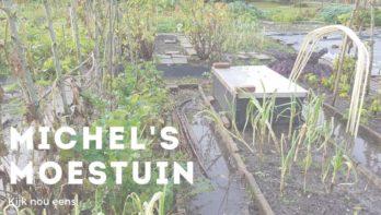 Een rijstplantage - Michel's Moestuin