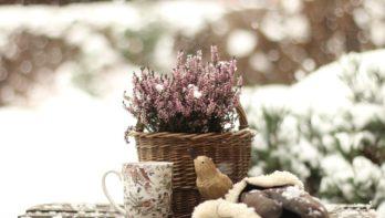 Tips voor de mooiste wintertuin