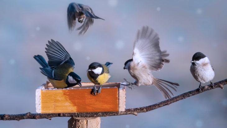Vogels voeren; welk voedersysteem gebruik je best om vogels te voeren?