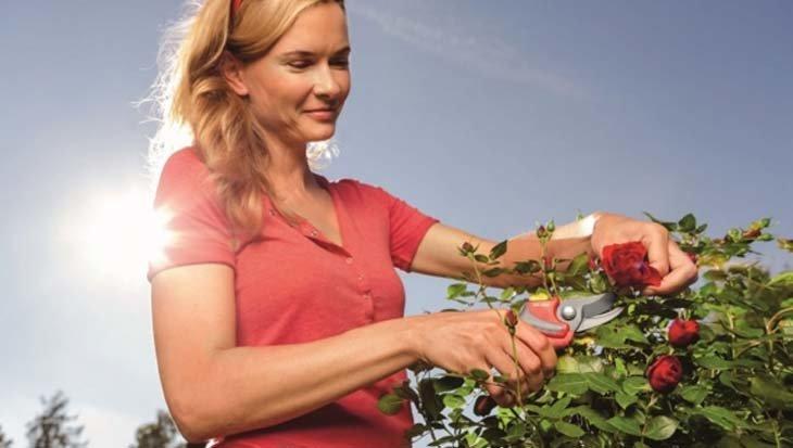 Nederlanders geven hun tuin een 7