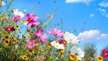 Waarom tuinieren gezond is voor je