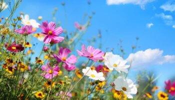 Tuinieren helpt je mentale gezondheid