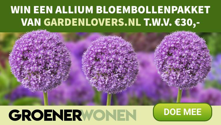 Winactie Groener Wonen Allium bloembollen pakket
