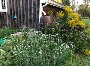 Duurzame tuin regenwater