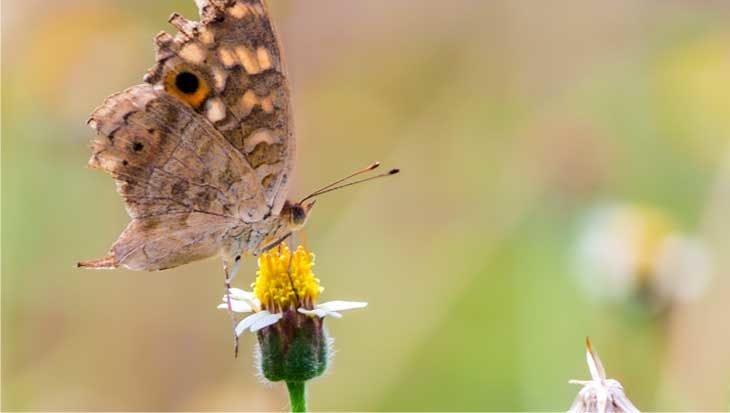 Tips voor een duurzame tuin
