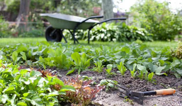 Subsidies voor een groene tuin of groen dak
