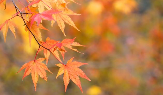 Wat te doen met herfstblad?