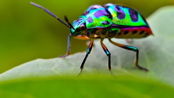 Tuin aantrekkelijk maken voor insecten