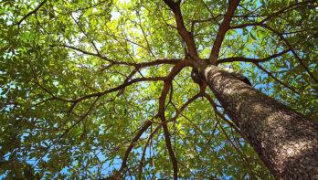Zo leer je bomen herkennen