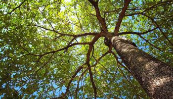 Zo leer je bomen herkennen.