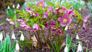 Tuinklussen in het prille voorjaar