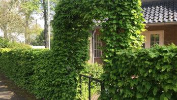 Populaire haagplanten en hun standplaatsen