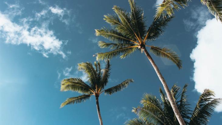 Palmboom in de tuin
