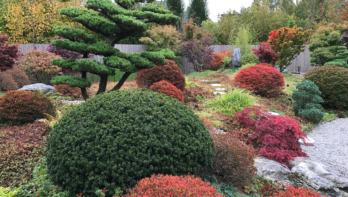 De Japanse tuin, ongeëvenaarde rust en kalmte