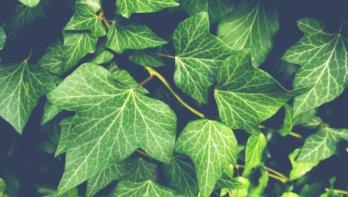 De duurzame carport: een alternatief voor de stenen tuin