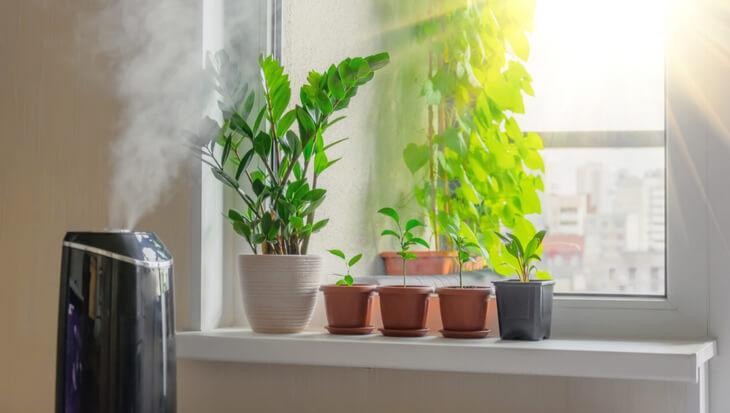 Kamerplanten in de winter luchtvochtigheid