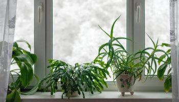 Kamerplanten in de winter verzorgen